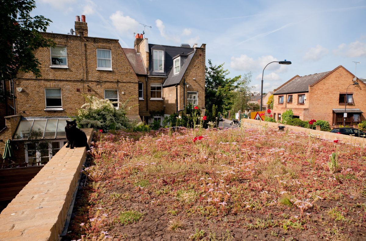 Project Manager Basement Extension green roof